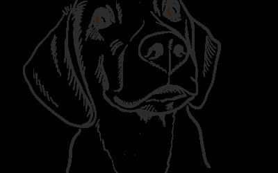 Perros de Particulares