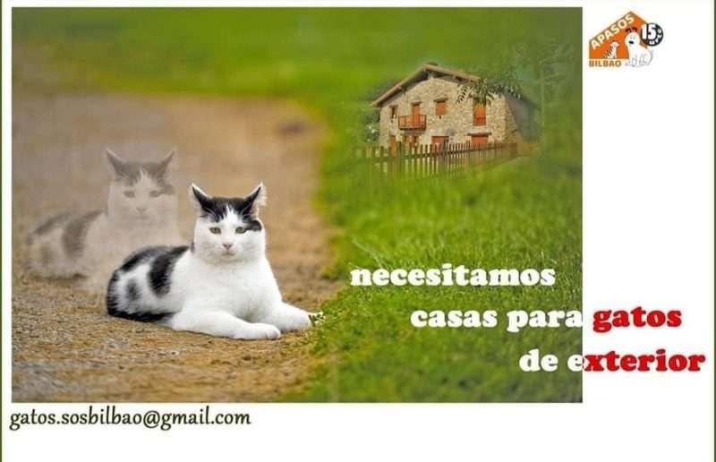 Gatos silvestres
